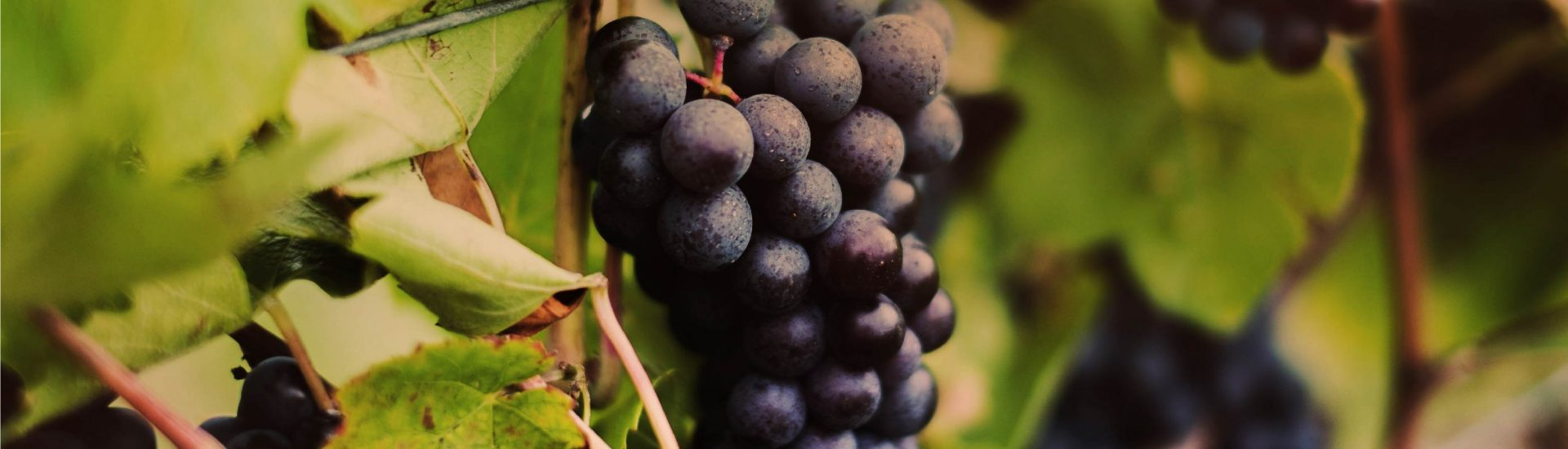 aime-boucher-french-wine-slider-grapes